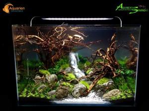 Aquarium Kauf