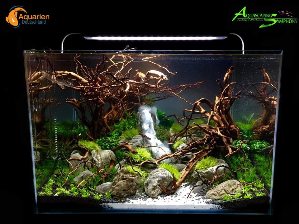 Aquascaping der neue trend in der aquaristik for Algen im aquarium
