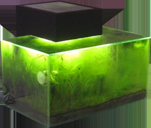 aquarium beleuchtung mittagspause